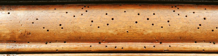 Dedetização de Cupins de madeira seca