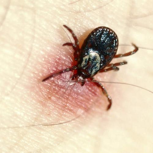 dedetizadora de pulgas e carrapatos